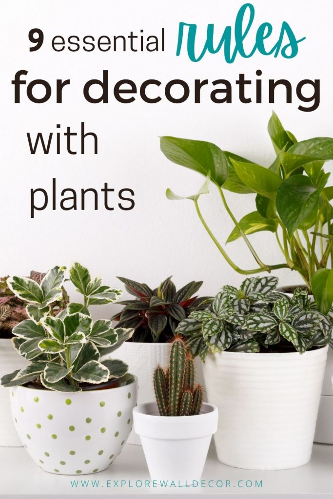 pin this image to share the 9 must-know rules for decorating with plants (and the best varieties for beginners)