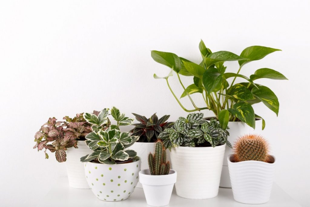 plants in coordinating white pots