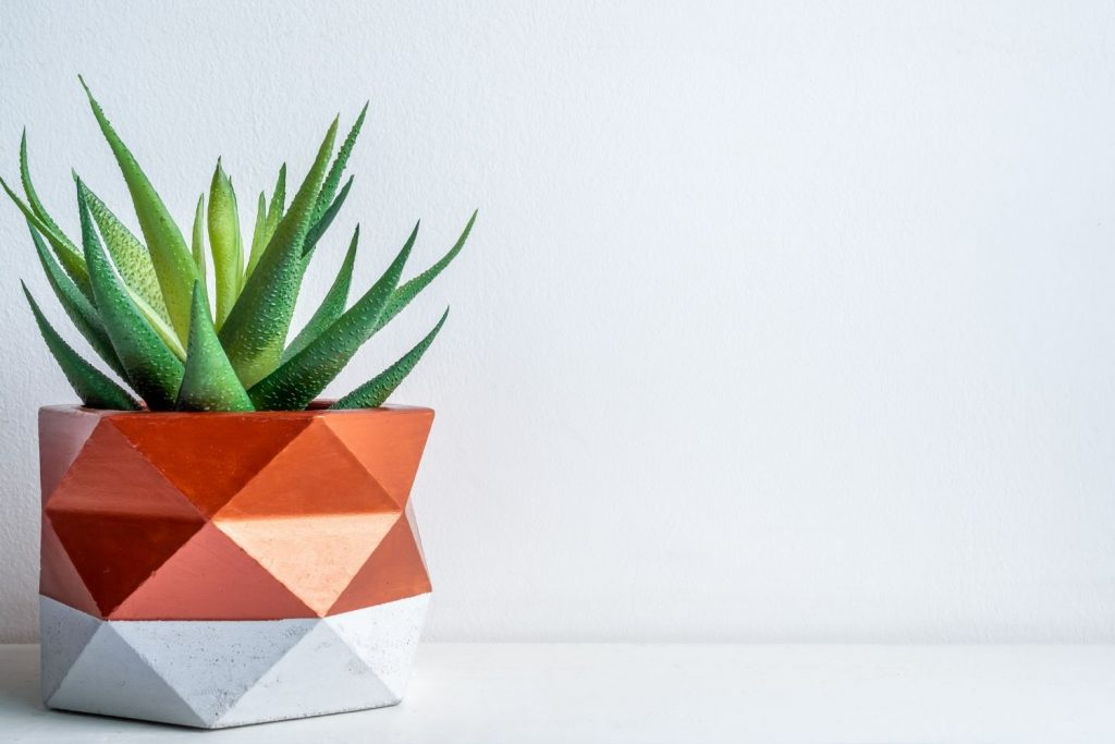 succulent in an orange and white container
