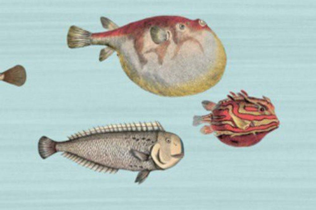 aquario pal wallpaper
